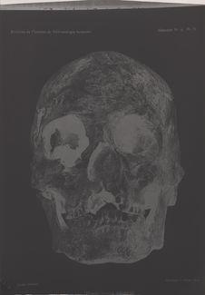 Crâne de l'homme d'Asselar
