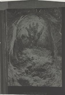 Main négative de la grotte de Gargas