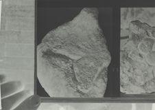 Bloc sculpté : tête de cheval