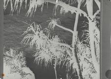 Sans titre [Ile de Pitcairn]