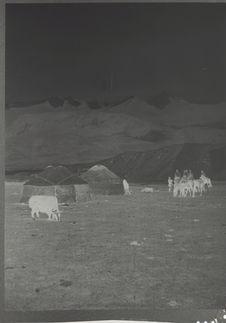 Campement Kirghiz et jeune yak