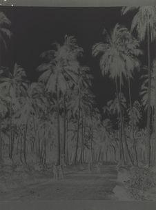 Cocotiers entre Mua et Mata Utu