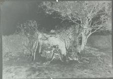 Bochimans devant leur hutte