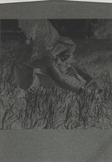 Zagora - Hartania coupant de l'herbe