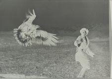 Dressage de l'aigle royal pour la chasse