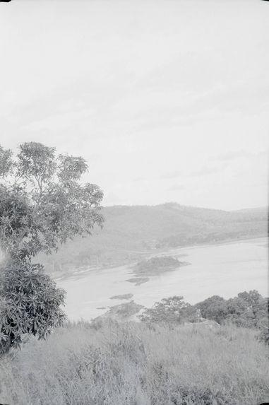 L'Oubangui, au 1er plan, manguiers