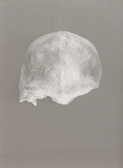 Crâne du Sinanthropus Pekinensis, Skull I, vue de face
