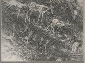 Peintures rupestres, à l'ocre : bovidés
