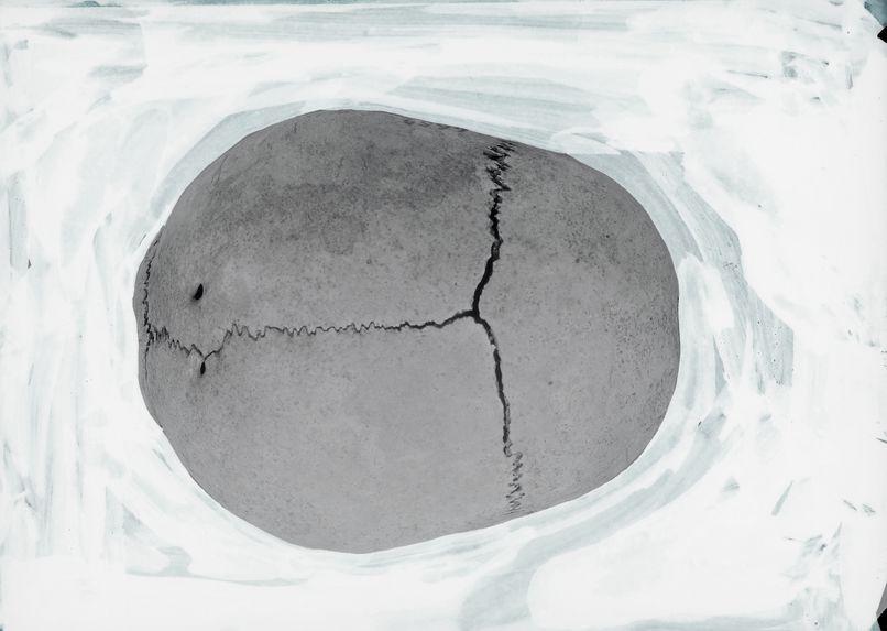 Crâne de Bongo-Adouma-Norma verticalis