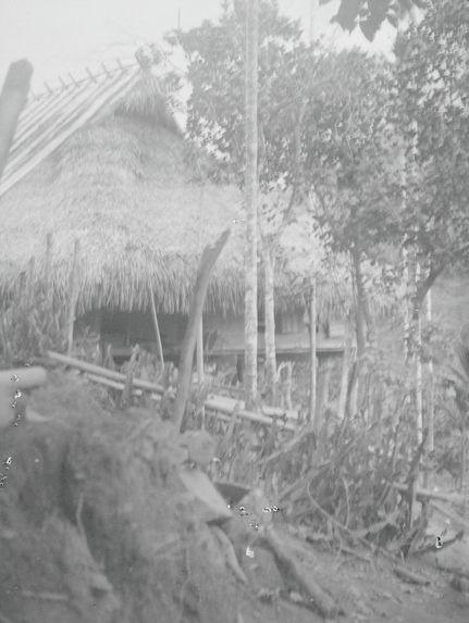 Haie de cactus entourant la case