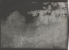 Sentier dans les herbes en saison des pluies