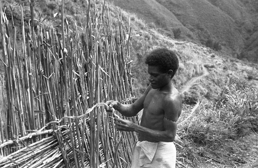 Buang Watut. Mission 1954-55. Bande film de 6 vues concernant la construction de palissades, la plantation des ignames et deux portraits