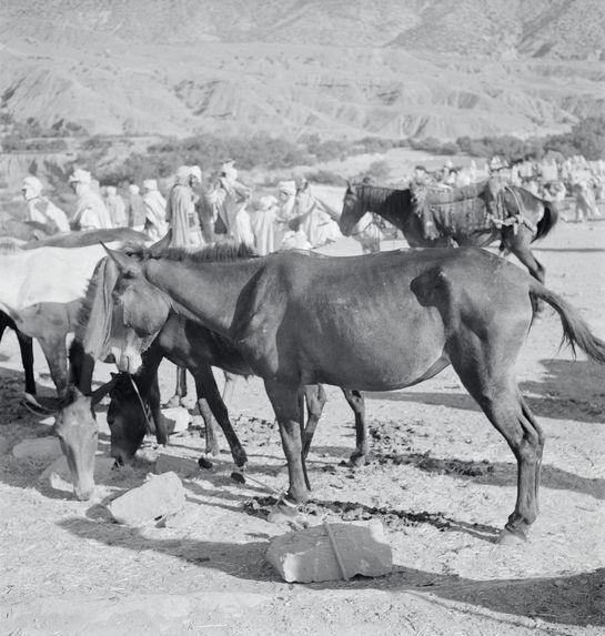 Marché annuel, mules à vendre