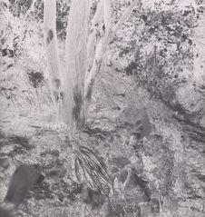 Abricotier irrigué [jardin rive droite]