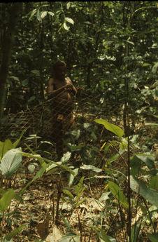 Pygmée Bambuti