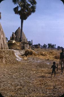 Sans titre [village avec des cases coniques en terre crue]