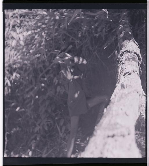 Sans titre [arbres dans les environs de Dalat]
