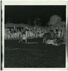 Dak To, buffles au poteau de sacrifice [cérémonie du buffle]