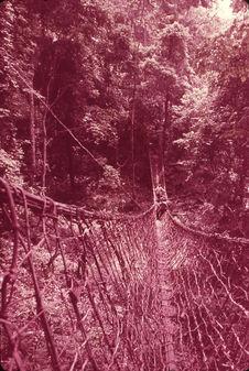 Pont de lianes à Man