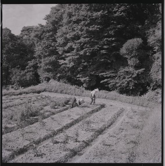 Kyoto 2 [deux personnes travaillant dans un champ]