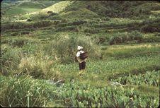 Taïwan [une femme, de dos, dans un champ]