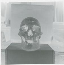 Crâne Tehuelche, face