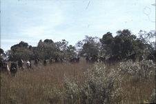 Sans titre [groupe de Maasaï dans les hautes herbes]