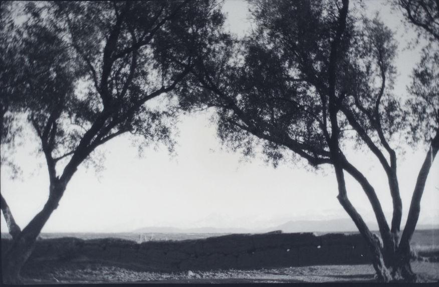 Sur la route d'Asni. La montagne vue d'un bois d'oliviers