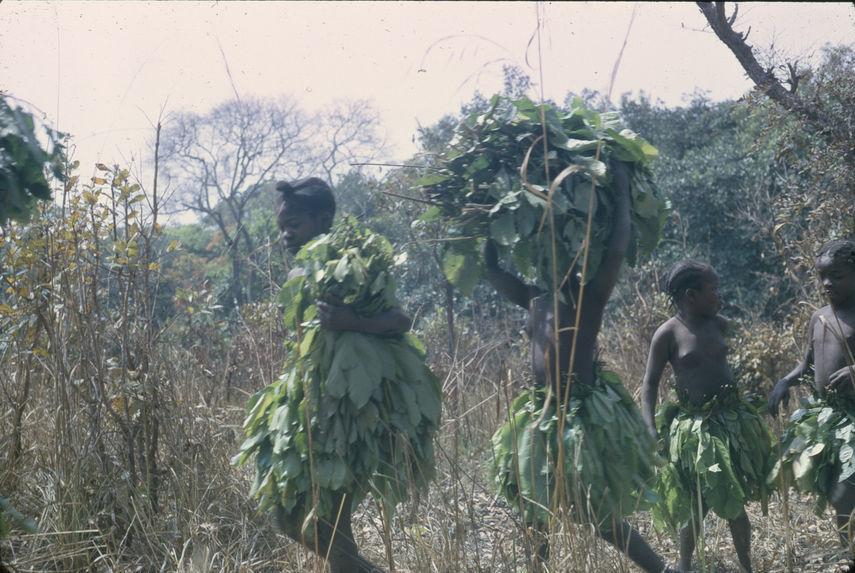"""Sans titre [transport d'une récolte de grandes feuilles lors du """"bana""""]"""