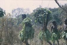 Sans titre [transport d'une récolte de grandes feuilles lors du...