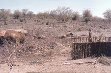 Sans titre [habitations, ânes et maasaï dans un paysage de broussailles]
