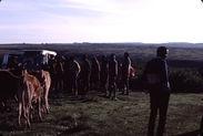 Sans titre [groupe de Maasaï et bovins près d'un véhicule]