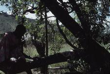 Sans titre [homme maasaï assis sur une branche d'arbre]