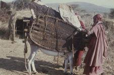 Sans titre [femmes maasaï chargeant un âne]