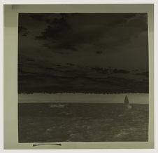Vues panoramiques : coraux et Araucarias