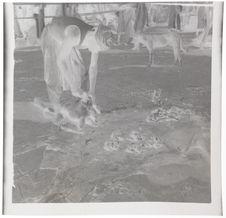 Le boucher à Nioro, cercle de Ségou (office du Niger)