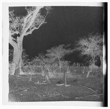 Tombes mossi dans un champ près du village