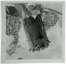 Feuilles de marantachlea flexuosa