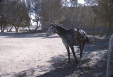 Cheval sans cavalier