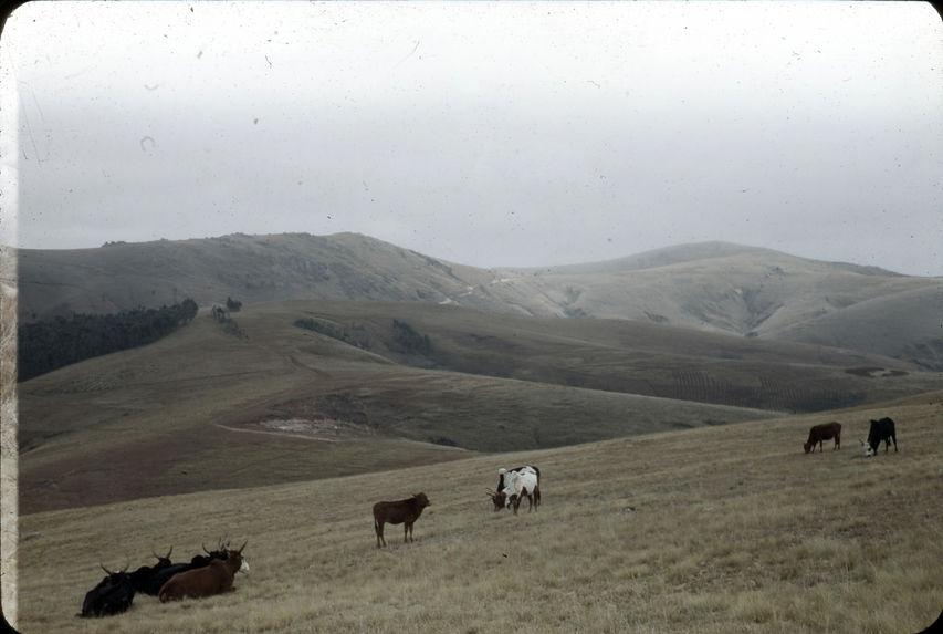 Prairies alpestres