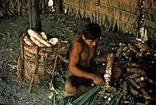 Epluchage des racines de manioc