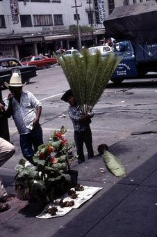 Marchands ambulants de palmiers