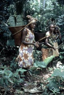 Femmes collectant des feuilles