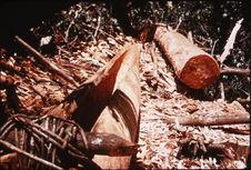 Construction d'une pirogue dans un tronc d'arbre