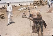 N'Guigmi-Niger à côté lac Tchad