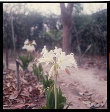 Sans titre [fleurs blanches]