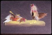 Détail tableau de plumes