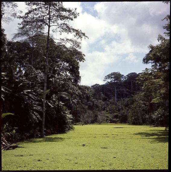 Sans titre [paysage de forêt dense et un fleuve]
