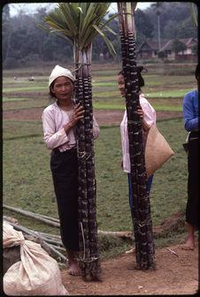 Vendeuses de cannes à sucre
