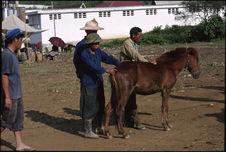 Inspection d'un poulain au marché aux chevaux